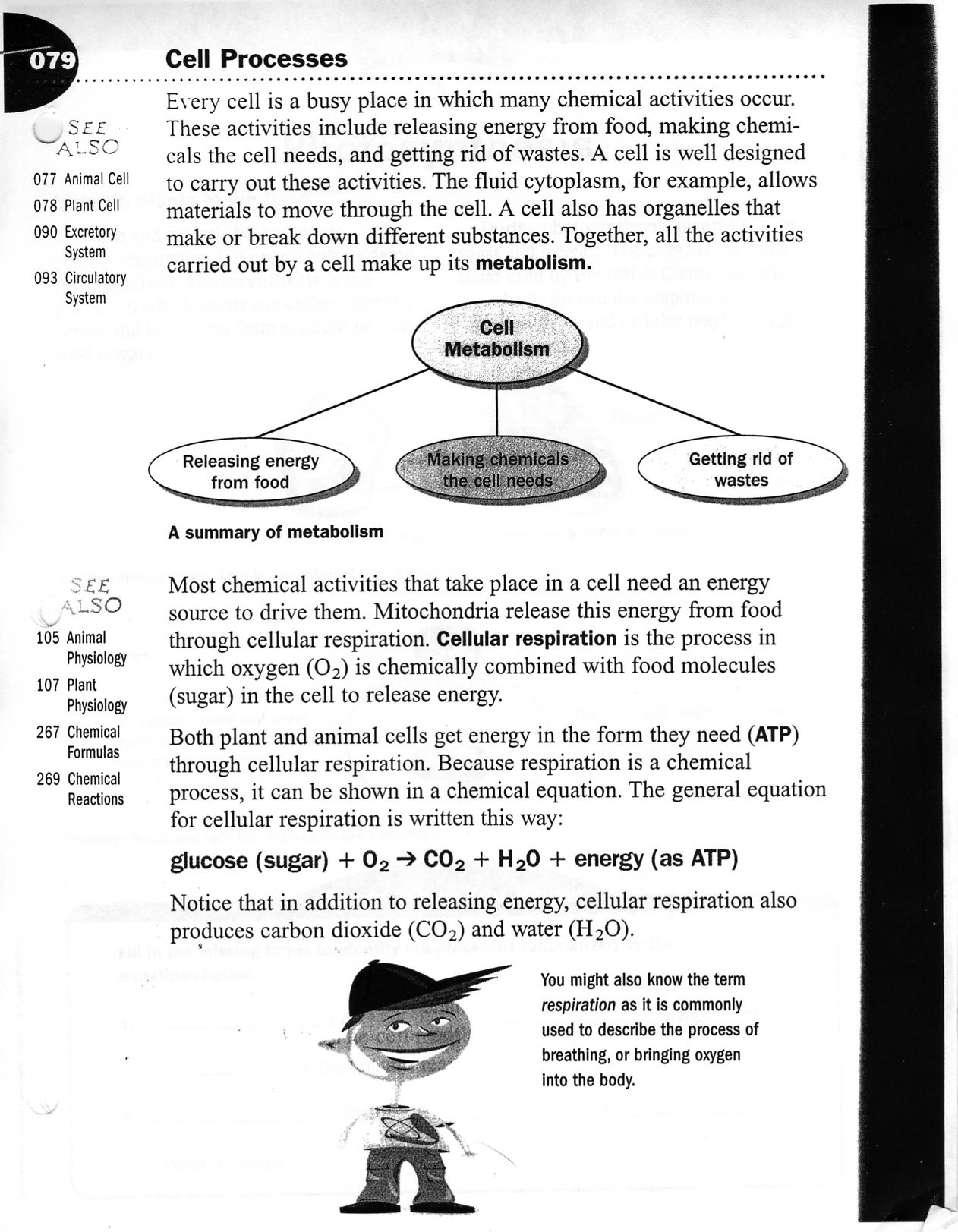 30 7 3 Cell Transport Worksheet Answers | Education Template