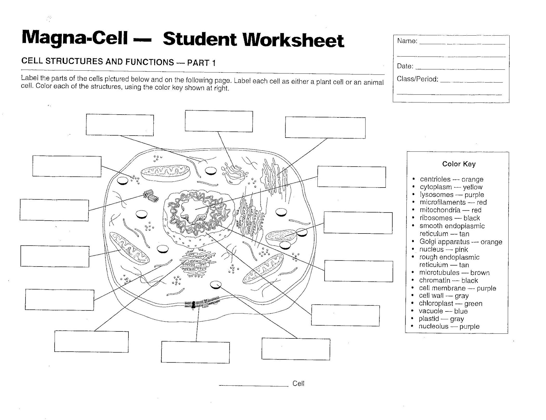 Animal Cells Worksheet Answers