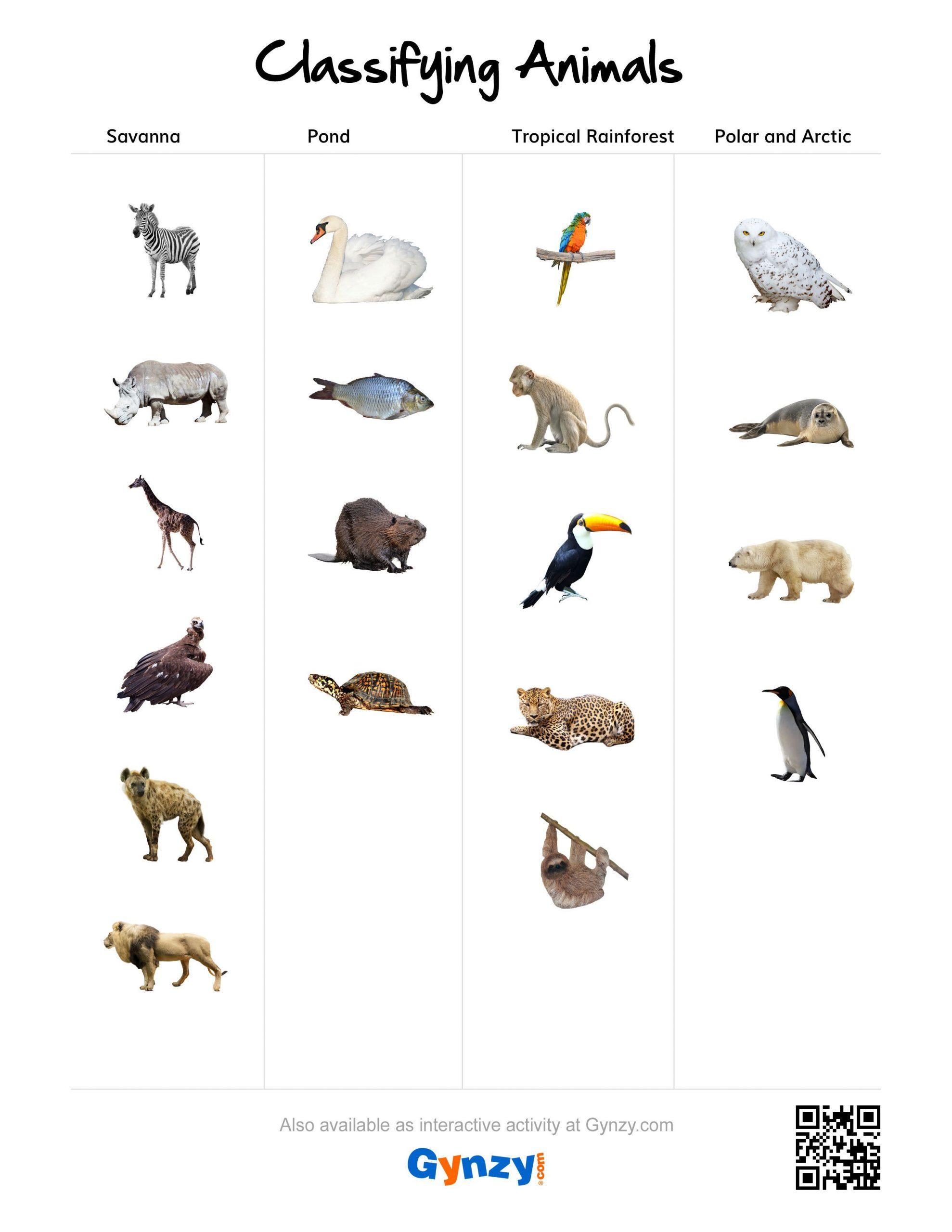 Animal Classification Worksheet Pdf