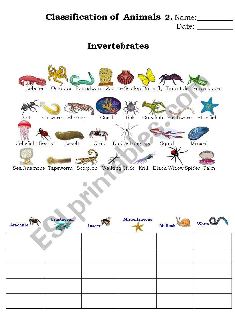 classification of animals 2 ESL worksheet by Beucici17