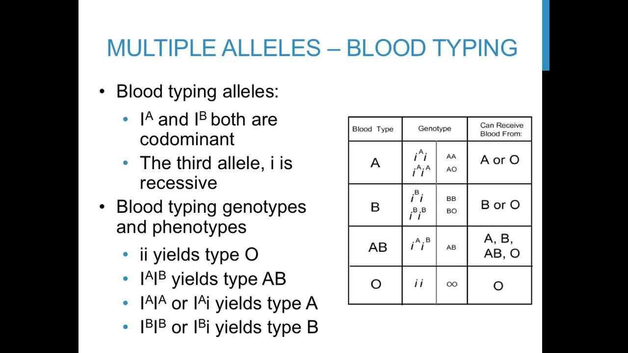 Blood Type and Inheritance Worksheet