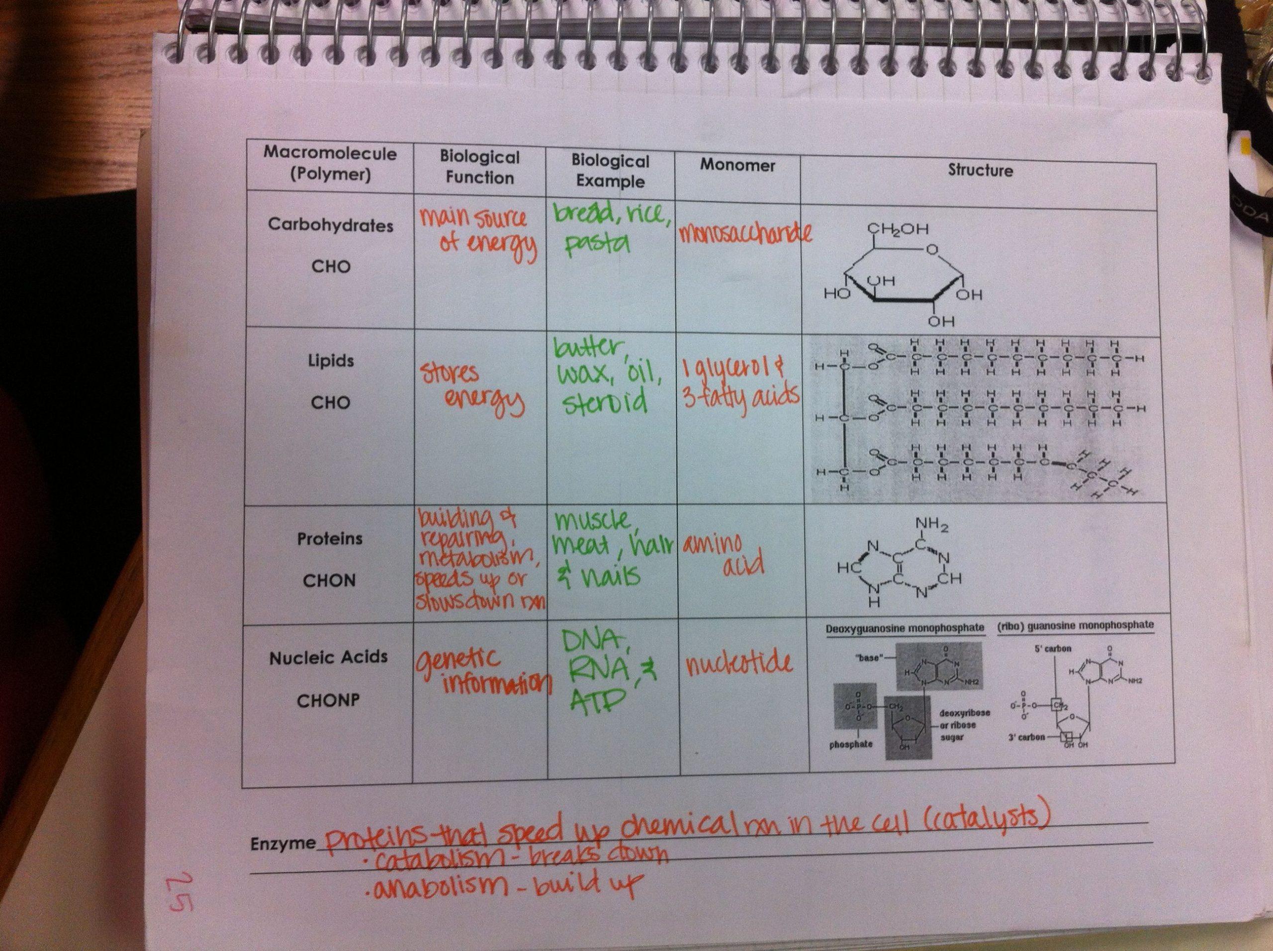 Building Macromolecules Worksheet Answers