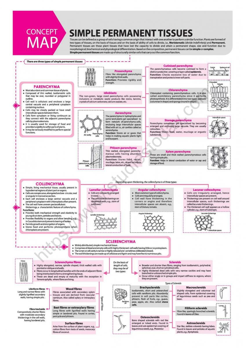 Cell Concept Map Worksheet Answers