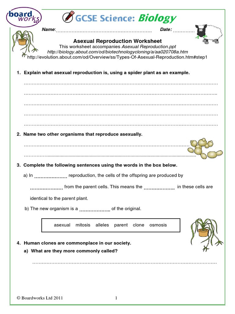 Cell Reproduction Worksheet Answers
