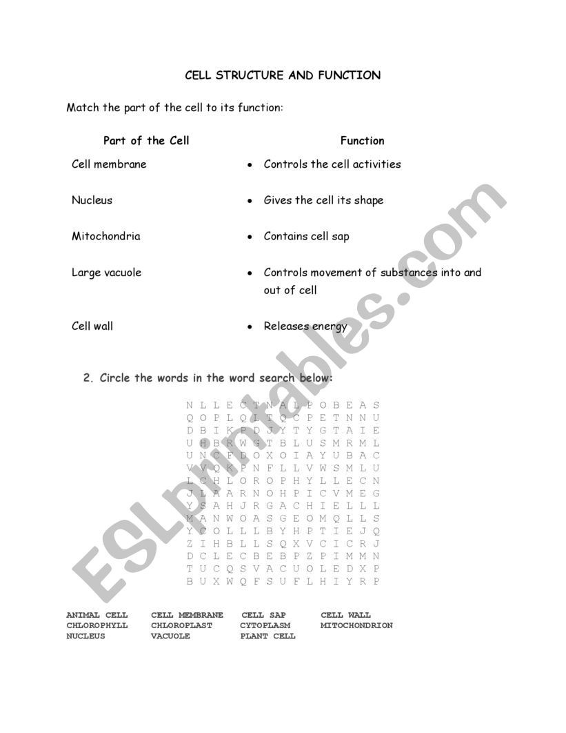 Cell Structure and Function Worksheet