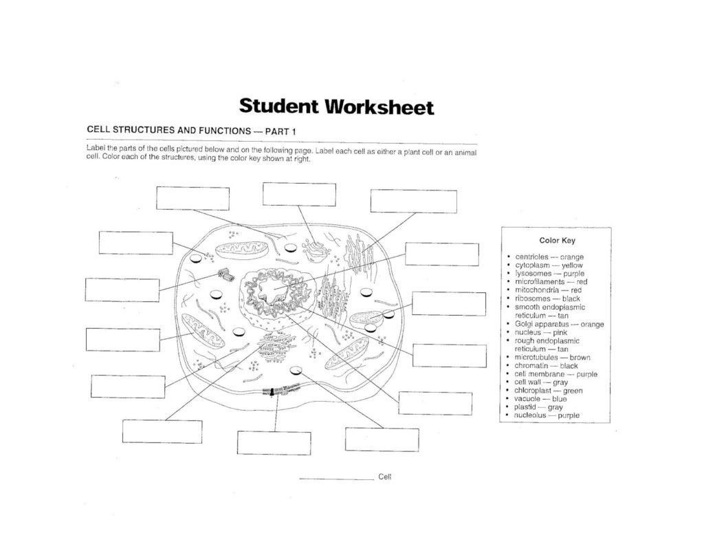 Cell Structure and Function Worksheet September 28 2017