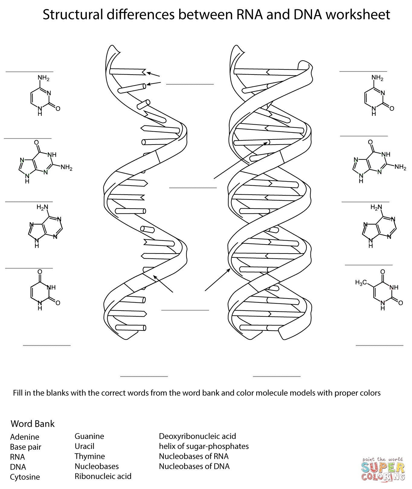 Dna and Replication Worksheet Answers