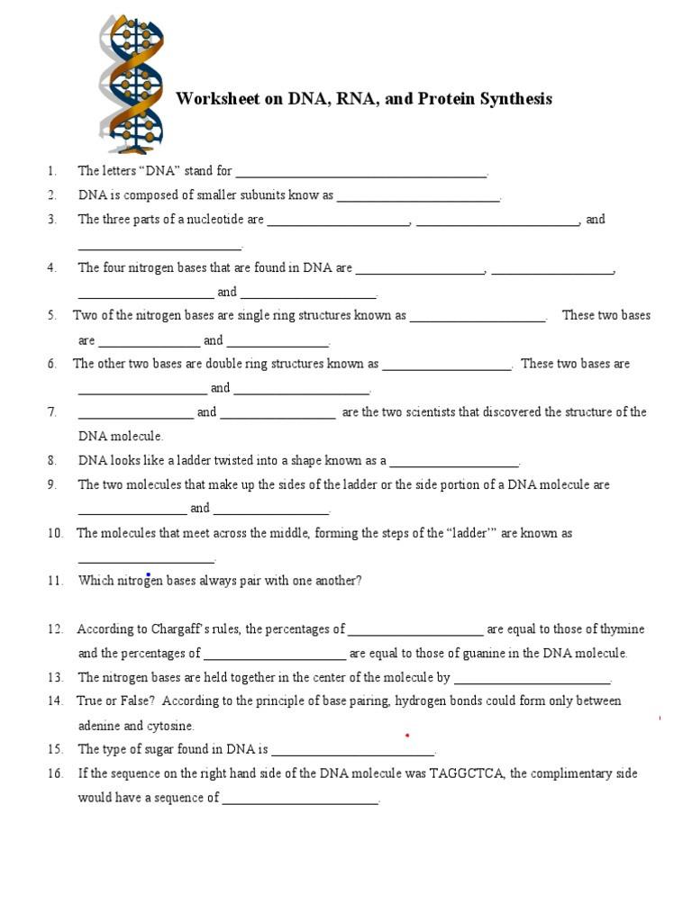 Dna Base Pairing Worksheet