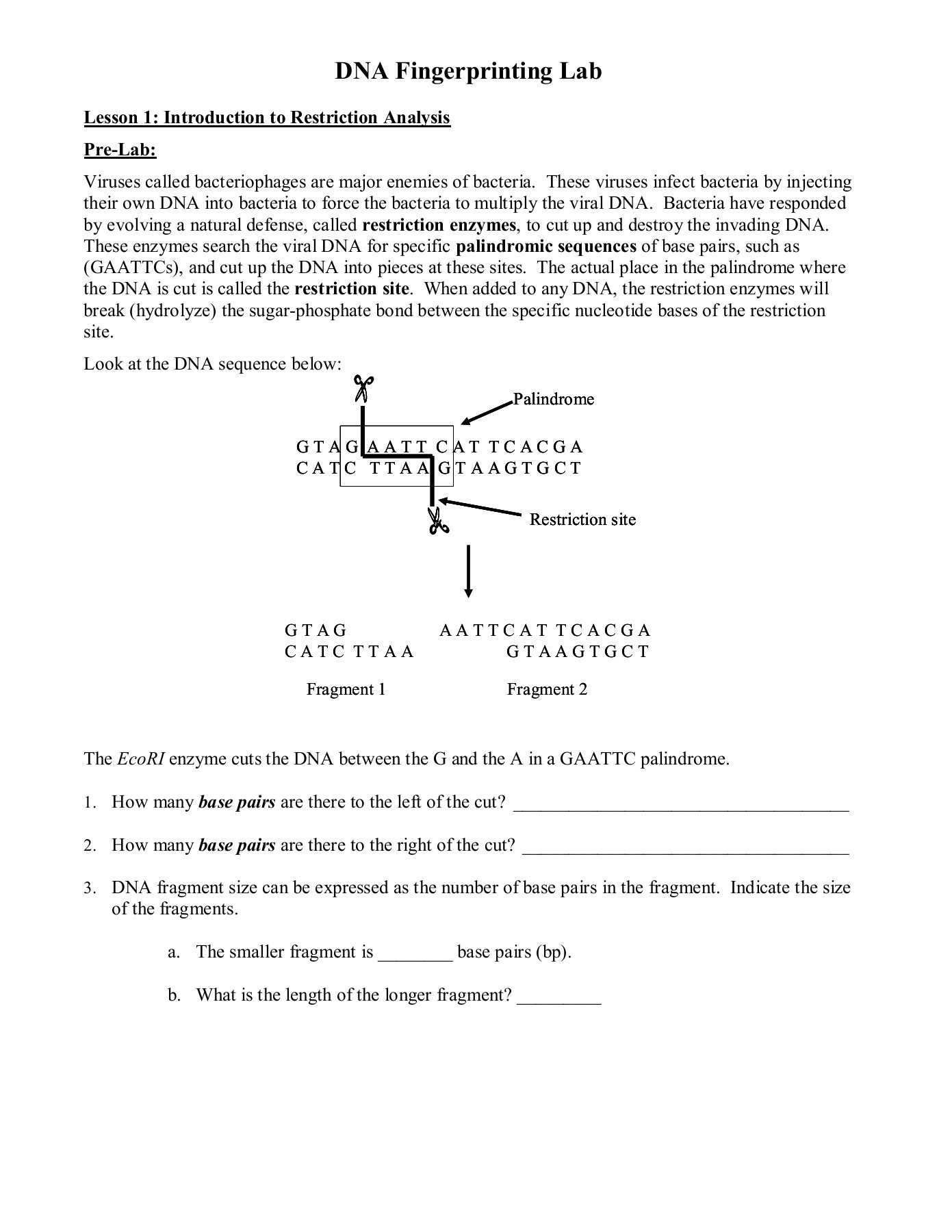30 Dna Fingerprinting Worksheet Answers | Education Template