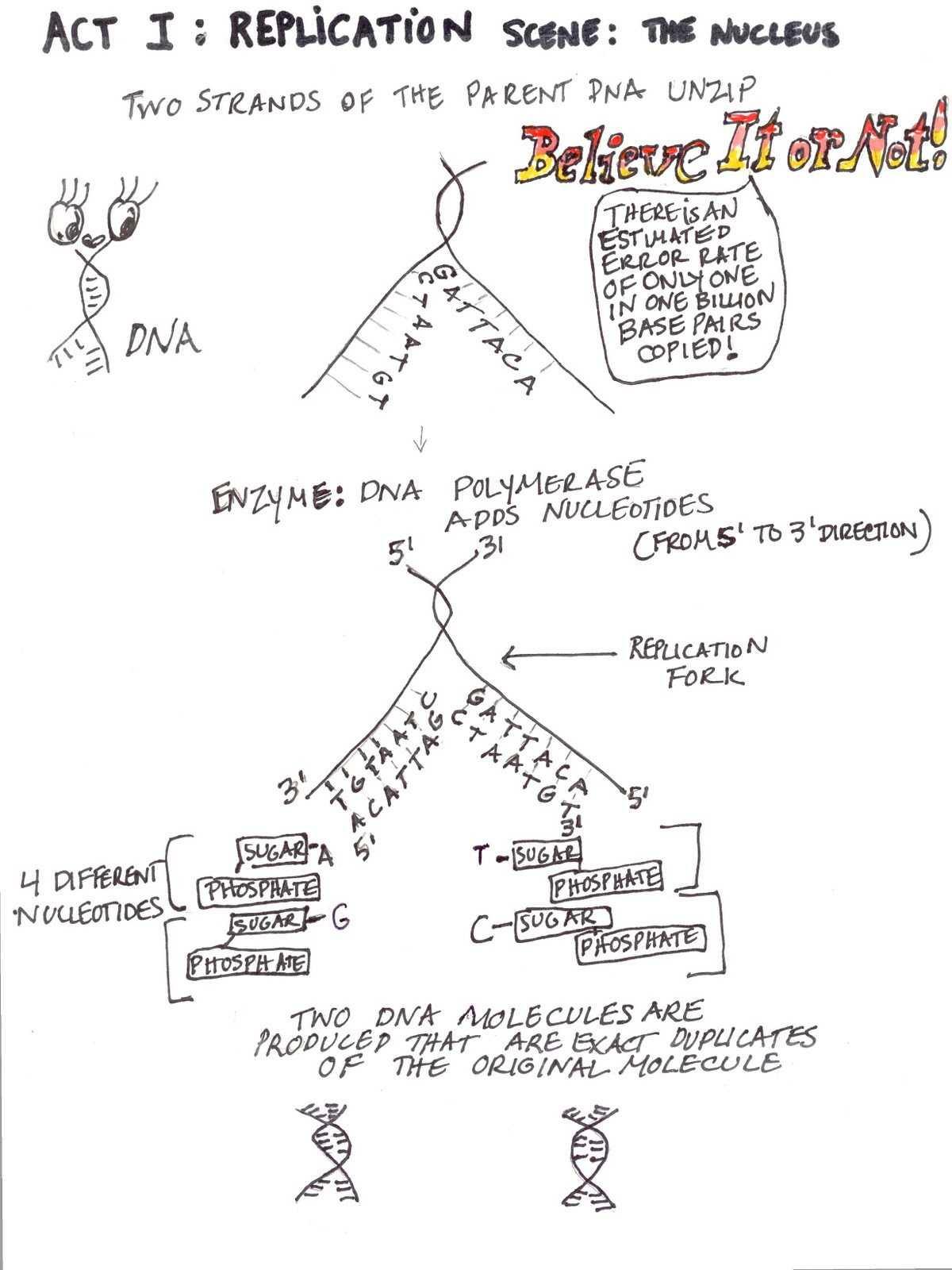 Dna Fingerprinting Worksheet Answers