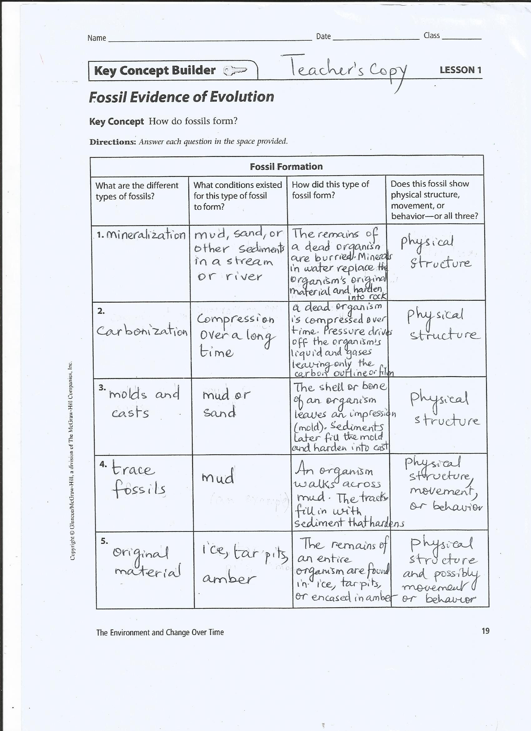 30 Evidence for Evolution Worksheet Answers | Education ...