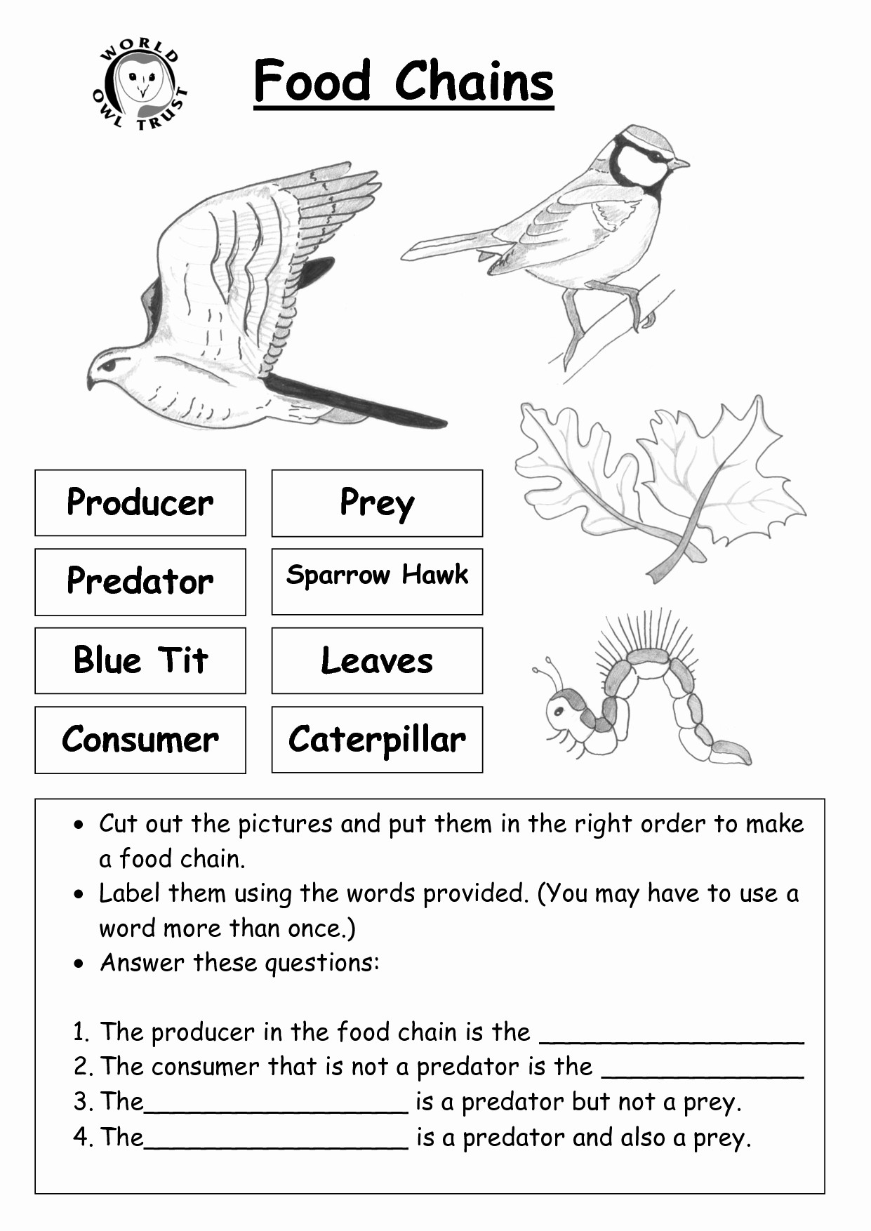 Food Chain Worksheet Answers
