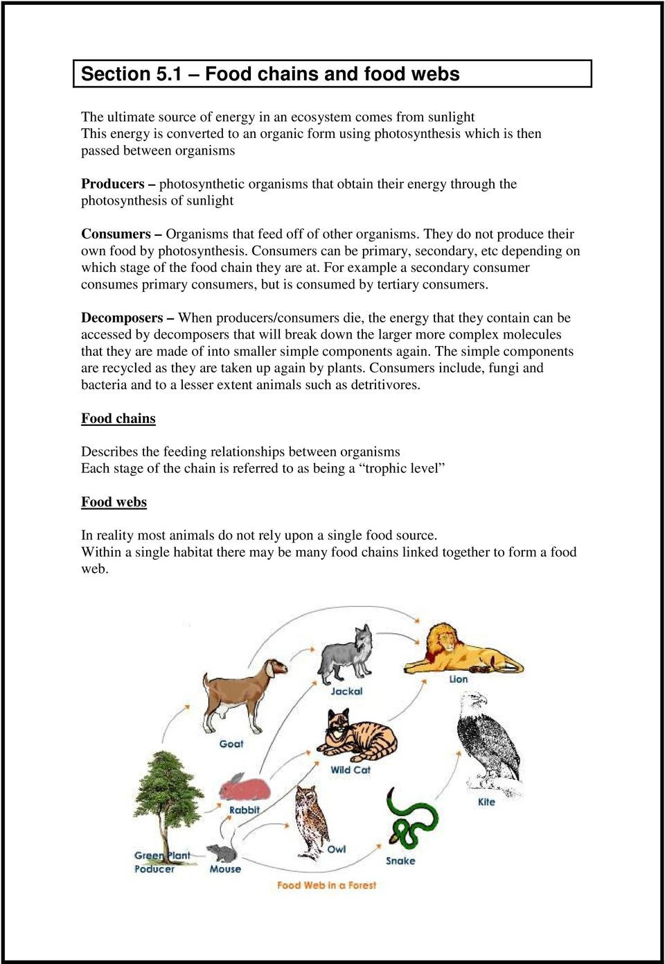 Food Web Worksheet Answers