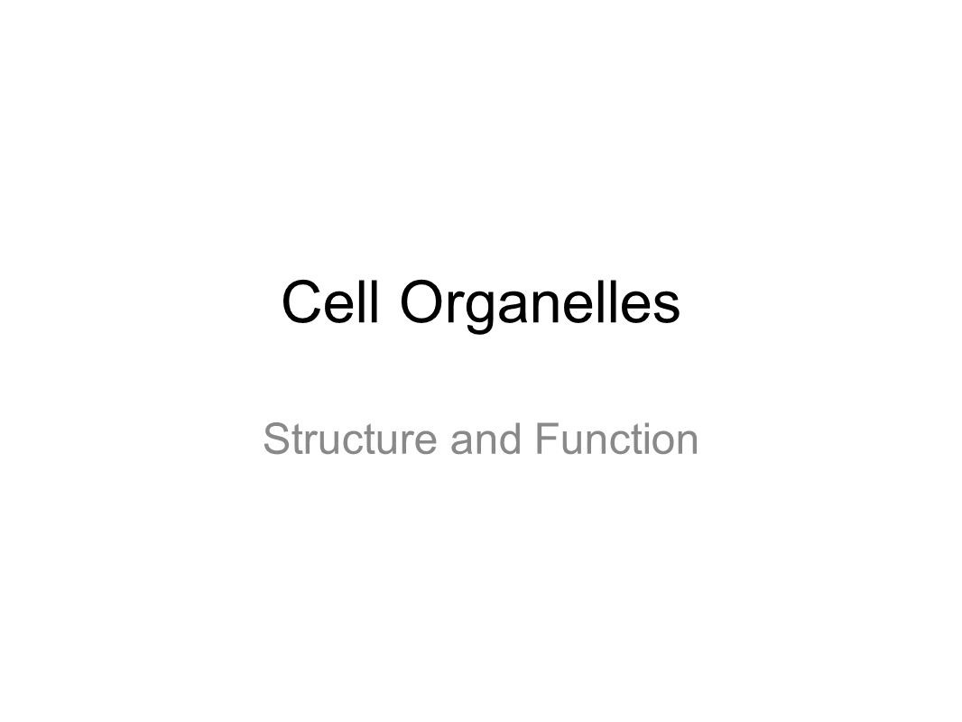 Function Of the organelles Worksheet