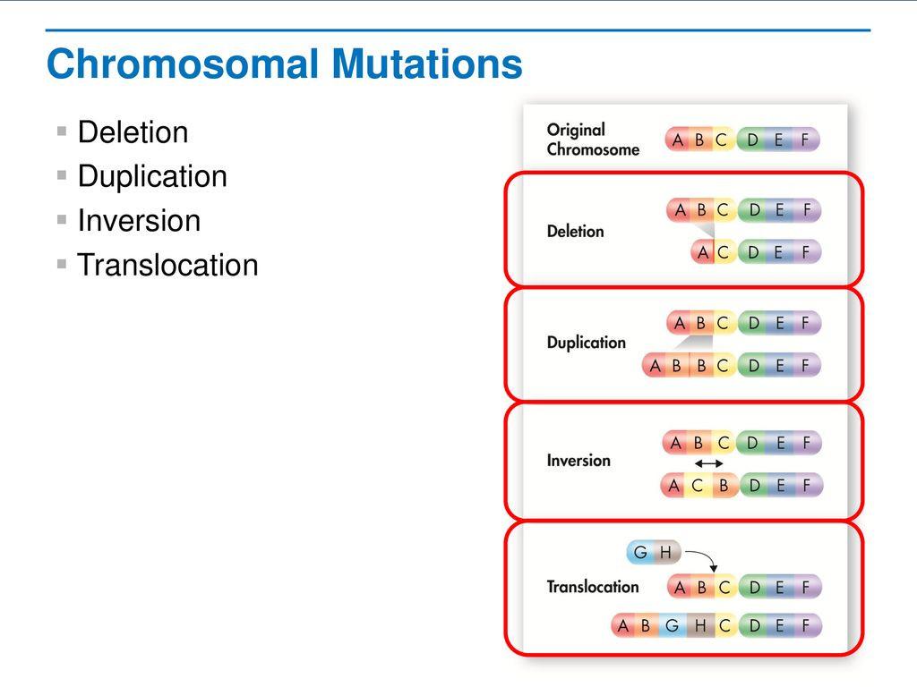 Genetic Mutations Worksheet Answer Key