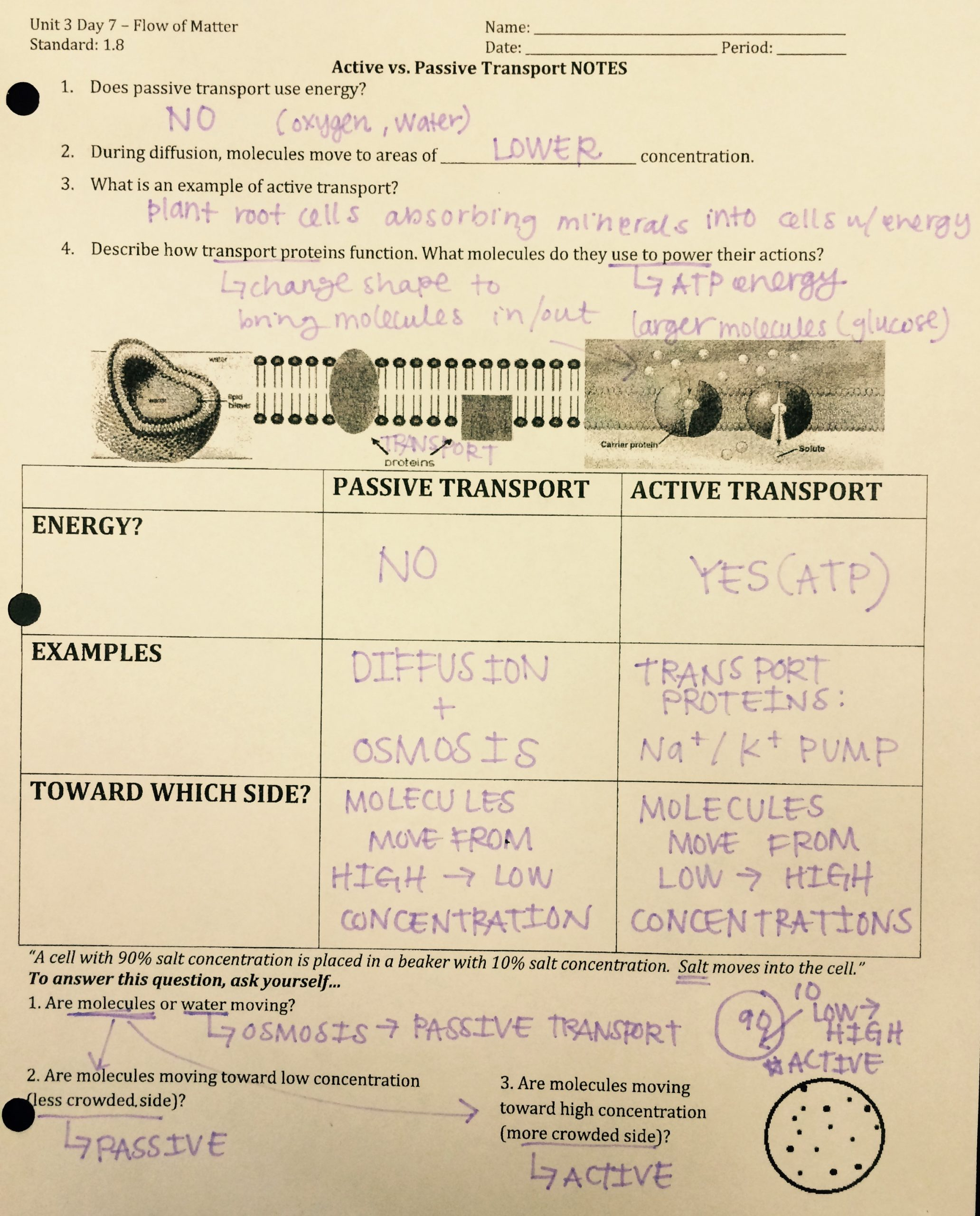 Passive and Active Transport Worksheet