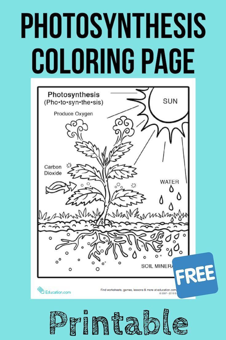 Photosynthesis Worksheet Middle School