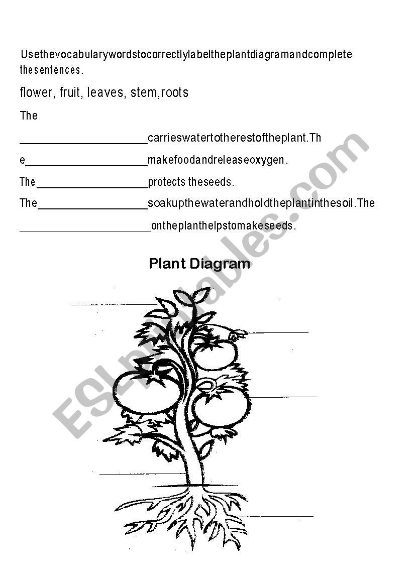Plant Parts and Functions Worksheet