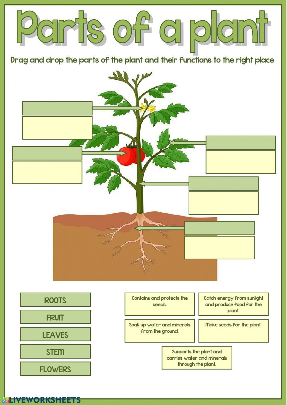 Parts of the plant Interactive worksheet