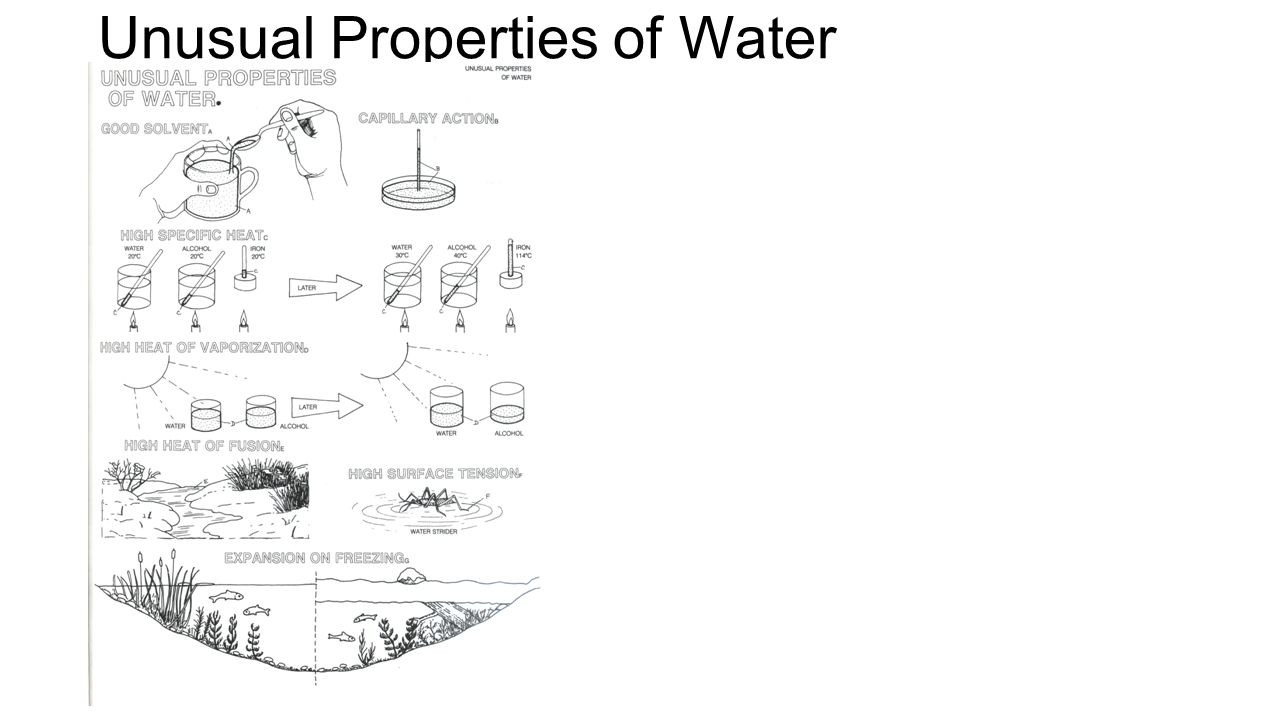 Properties Of Water Worksheet Answers