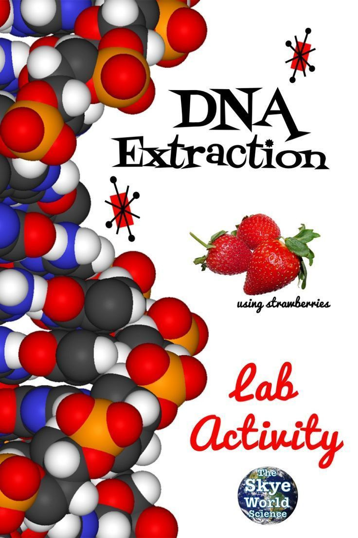 Strawberry Dna Extraction Lab Worksheet