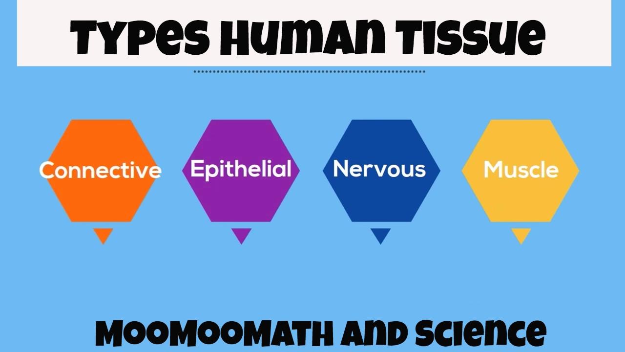 Types Of Tissues Worksheet