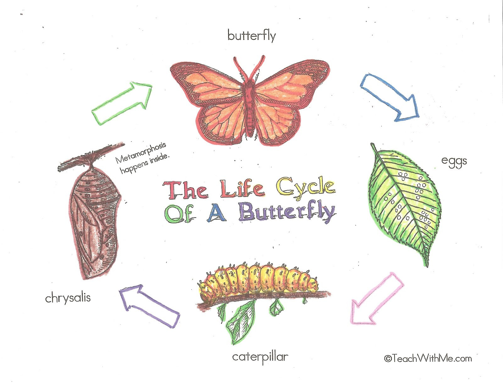 Butterfly Life Cycle Worksheet 2