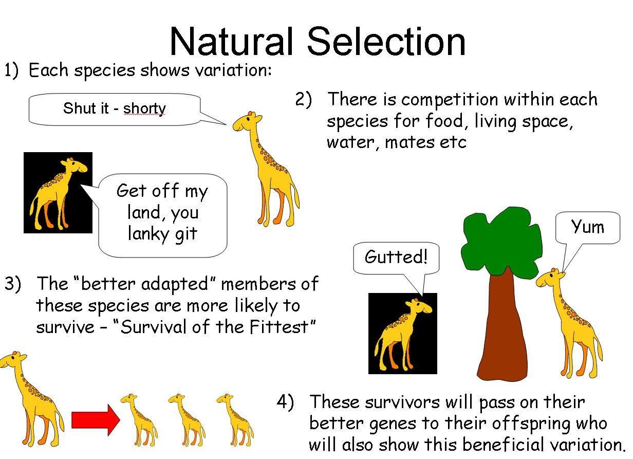 Darwin039s Natural Selection Worksheet Answers
