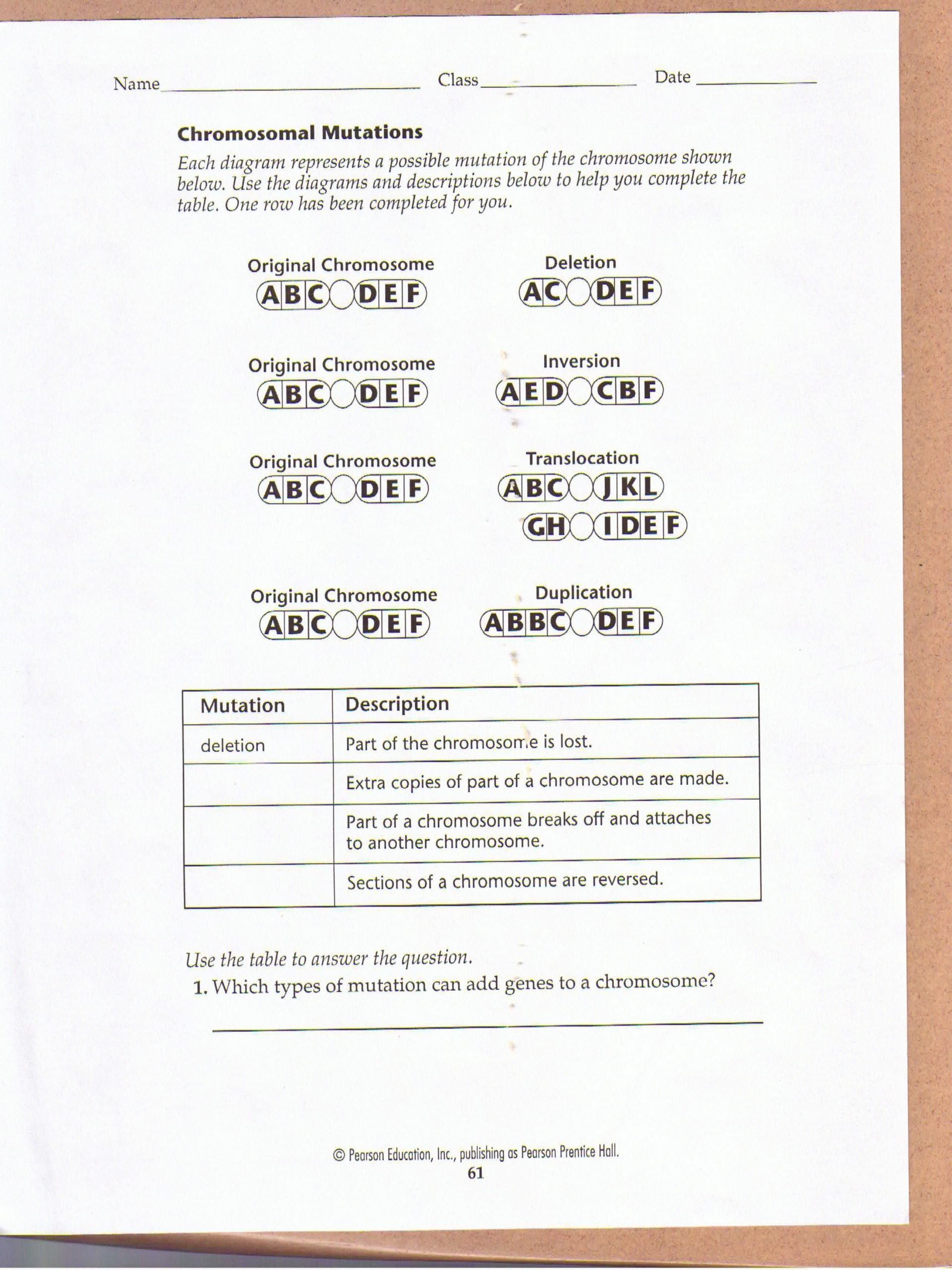 Dna Mutations Practice Worksheet Answers