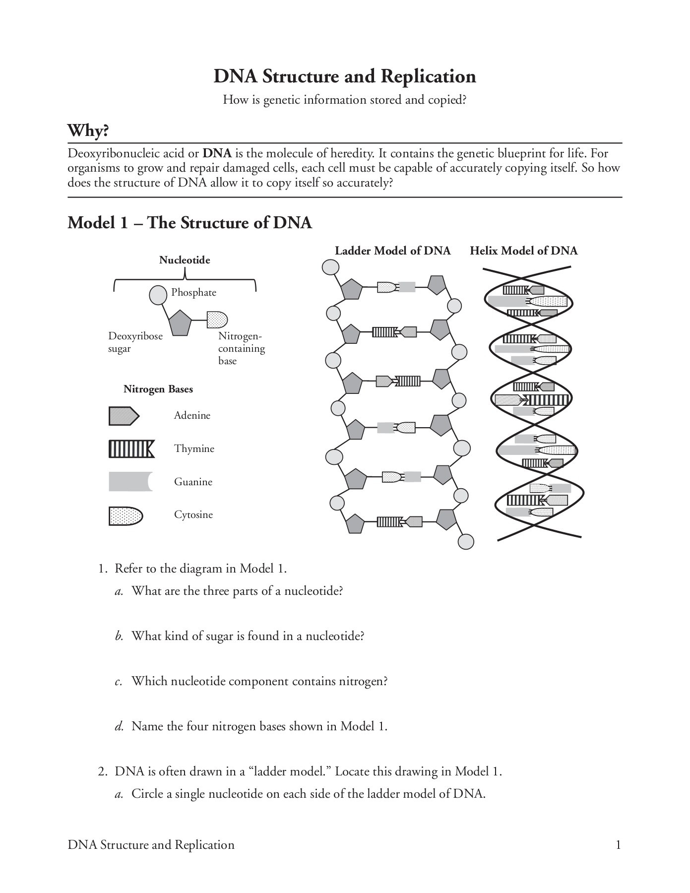 Dna Structure and Replication Worksheet