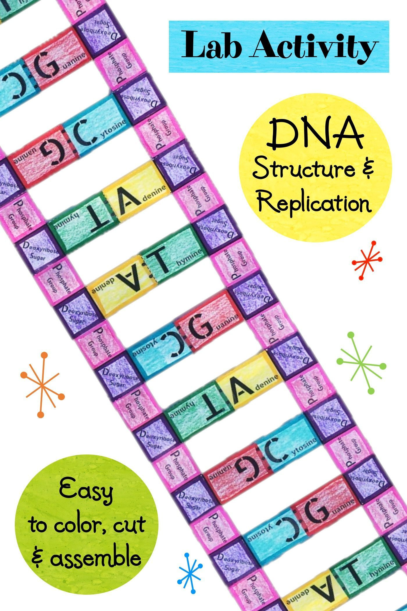 30 Dna Structure and Replication Worksheet | Education ...