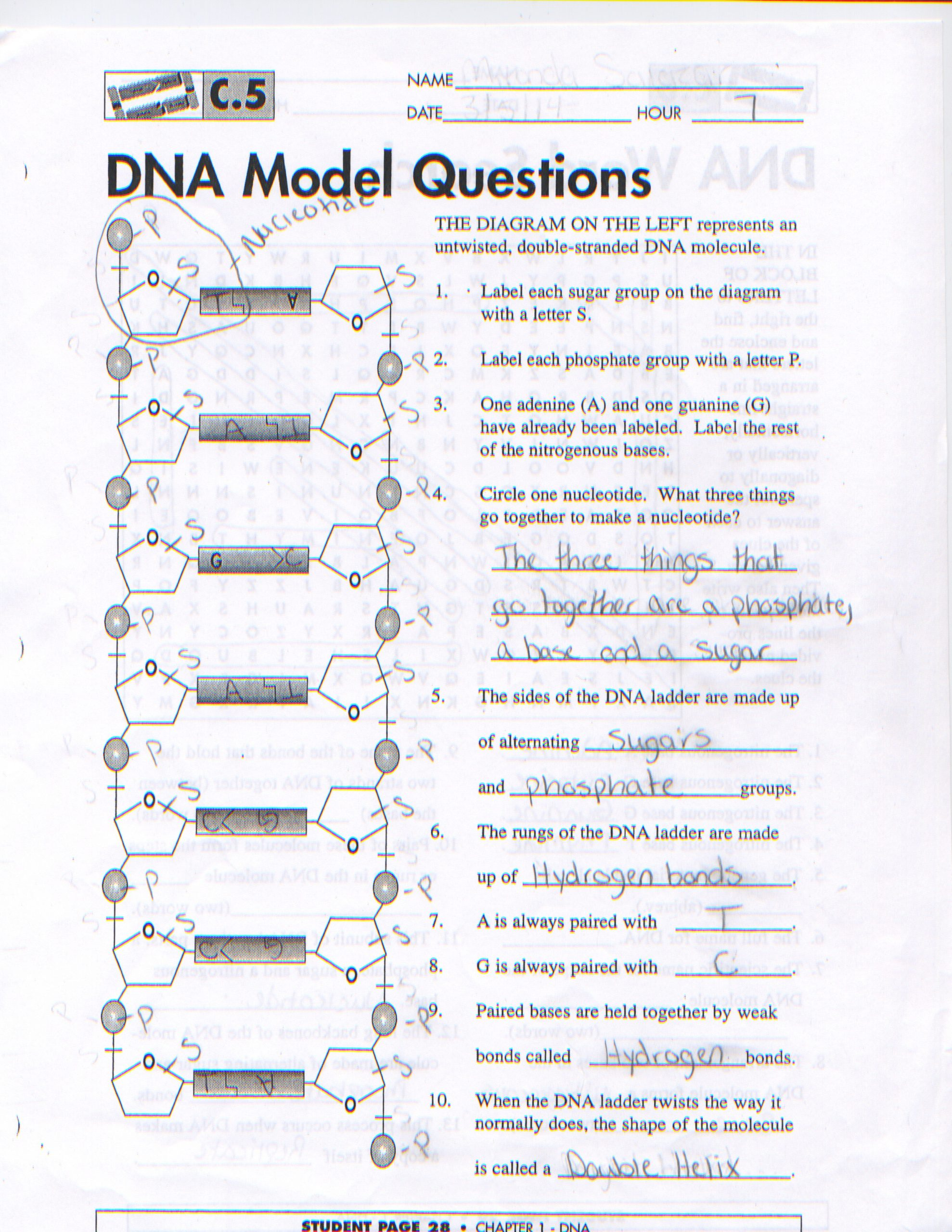 Dna Structure Worksheet Answer Key