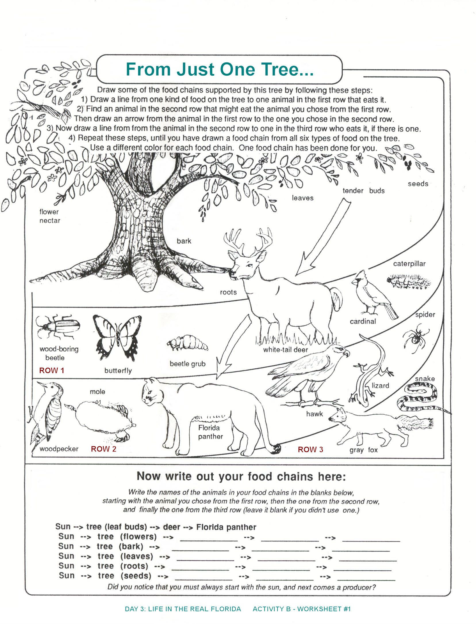 Ecology Review Worksheet 1