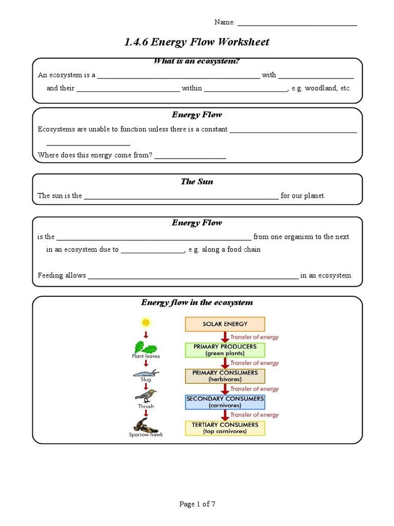 1 4 6 Energy Flow Worksheet Food Web