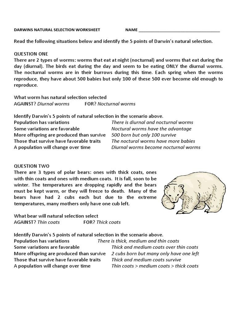 Evolution and Natural Selection Worksheet