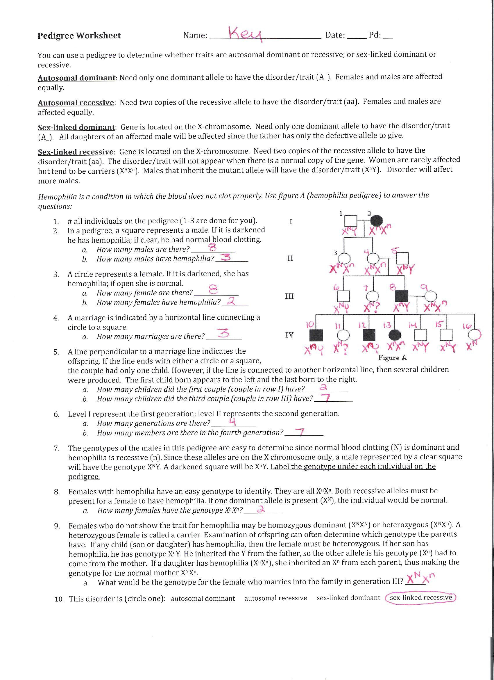 Genetics Pedigree Worksheet Answers