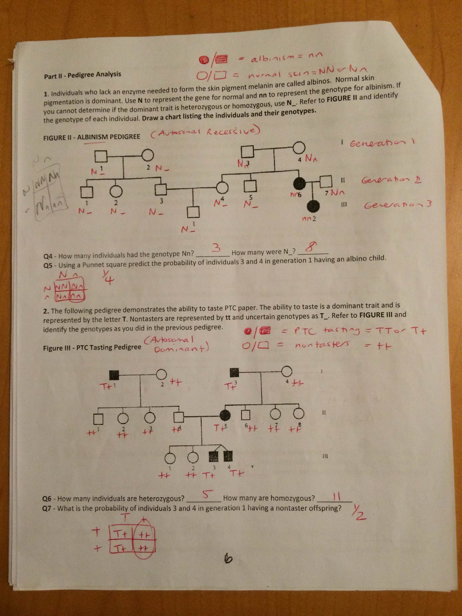 30 Genetics Pedigree Worksheet Answers | Education Template