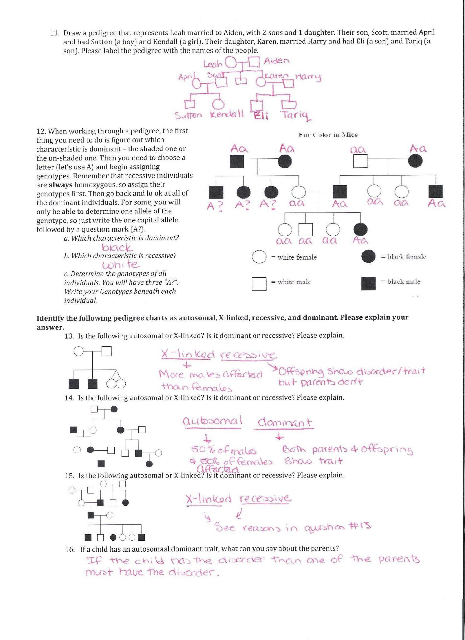 Genetics Pedigree Worksheet Answer Key With images
