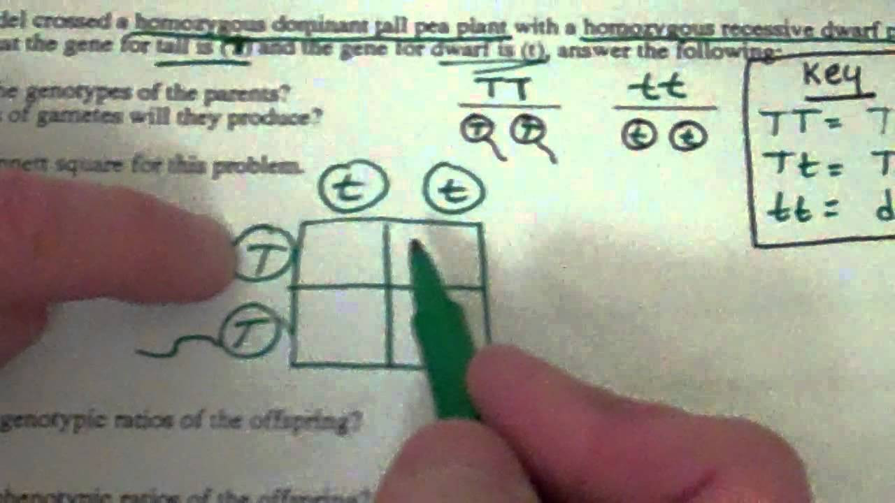 Genetics Problems Worksheet Answers