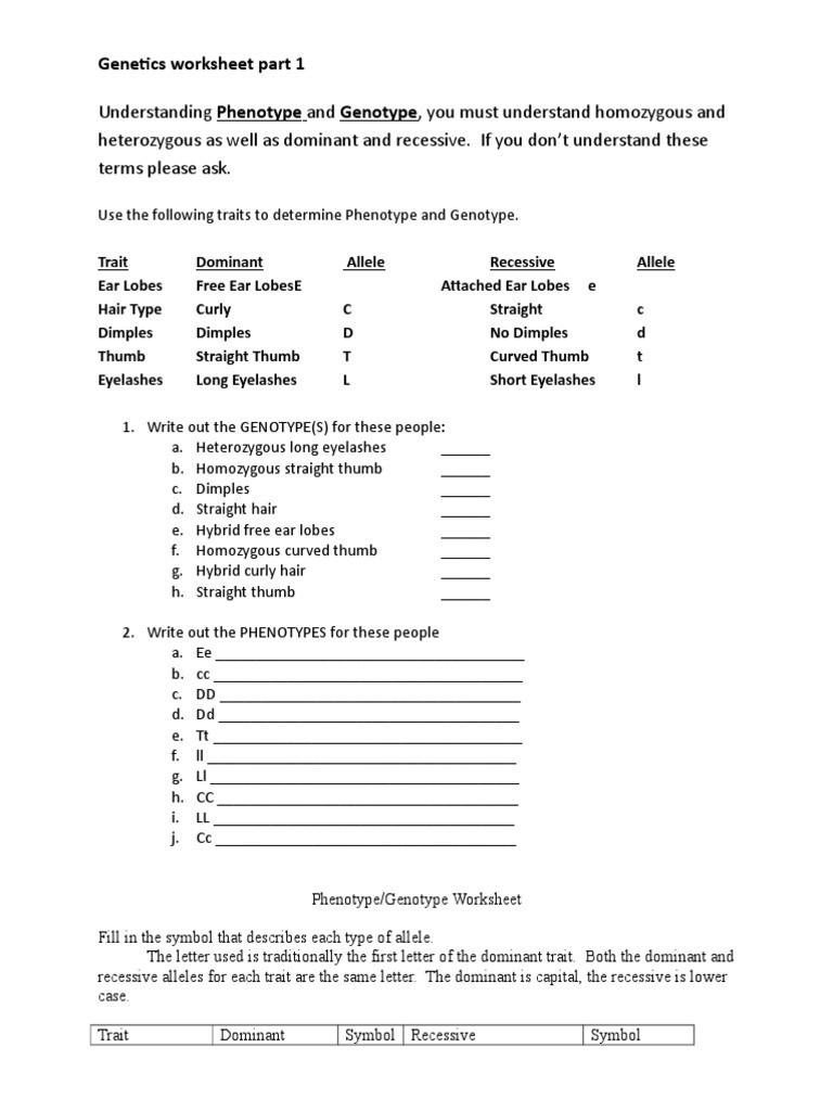 30 Genetics Worksheet Answer Key | Education Template