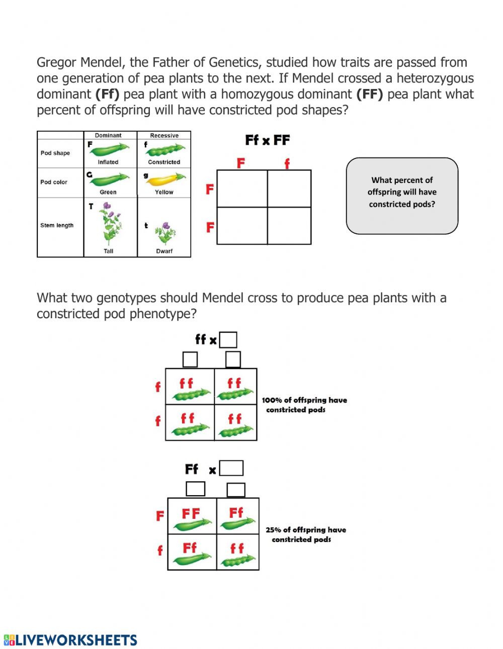 Genetics Worksheet Answer Key