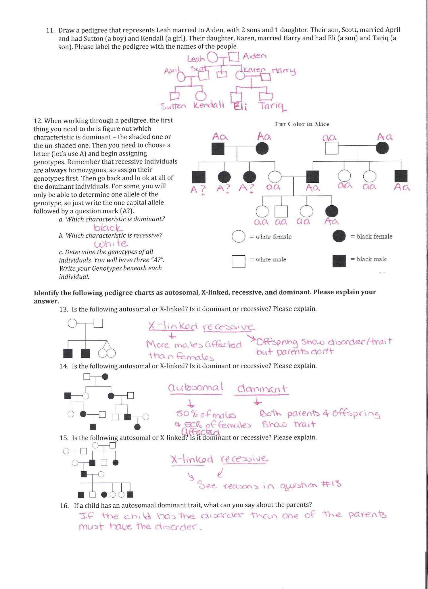 Genetics Worksheet Answer Key | Education Template