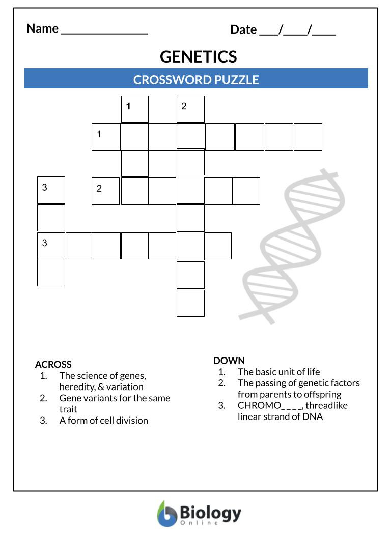 Genetics X Linked Genes Worksheet