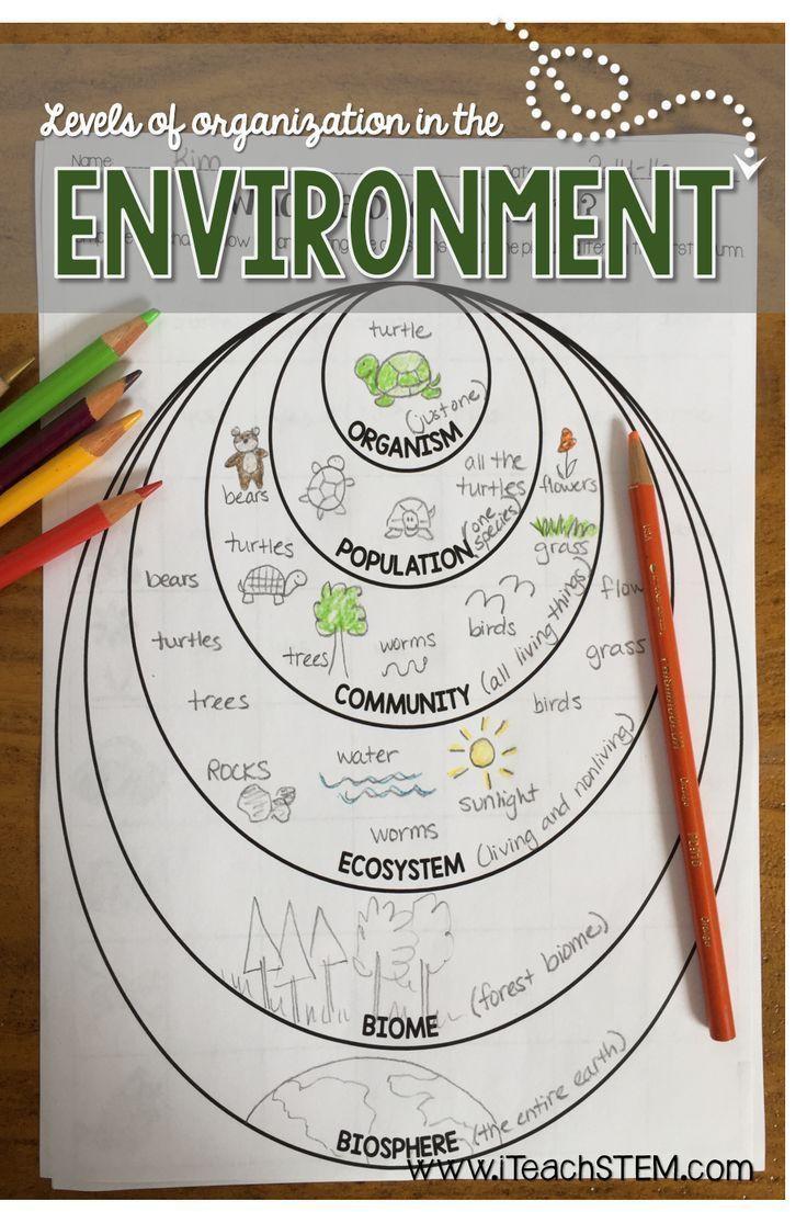 Levels Of organization Worksheet