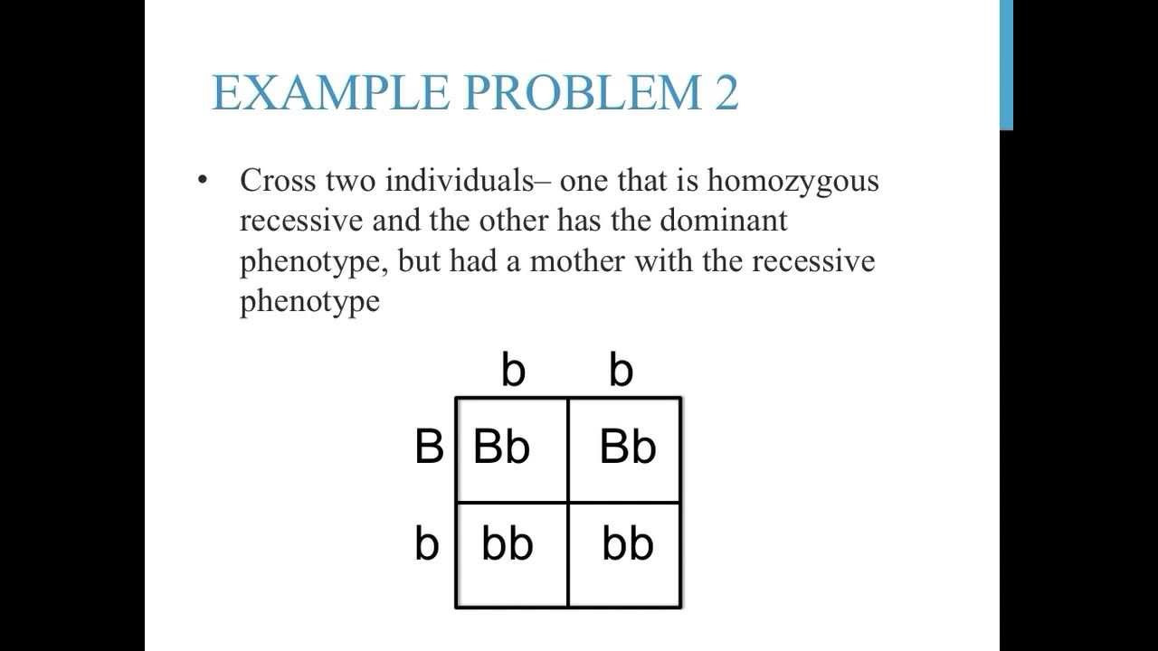 Monohybrid Crosses Worksheet Answers