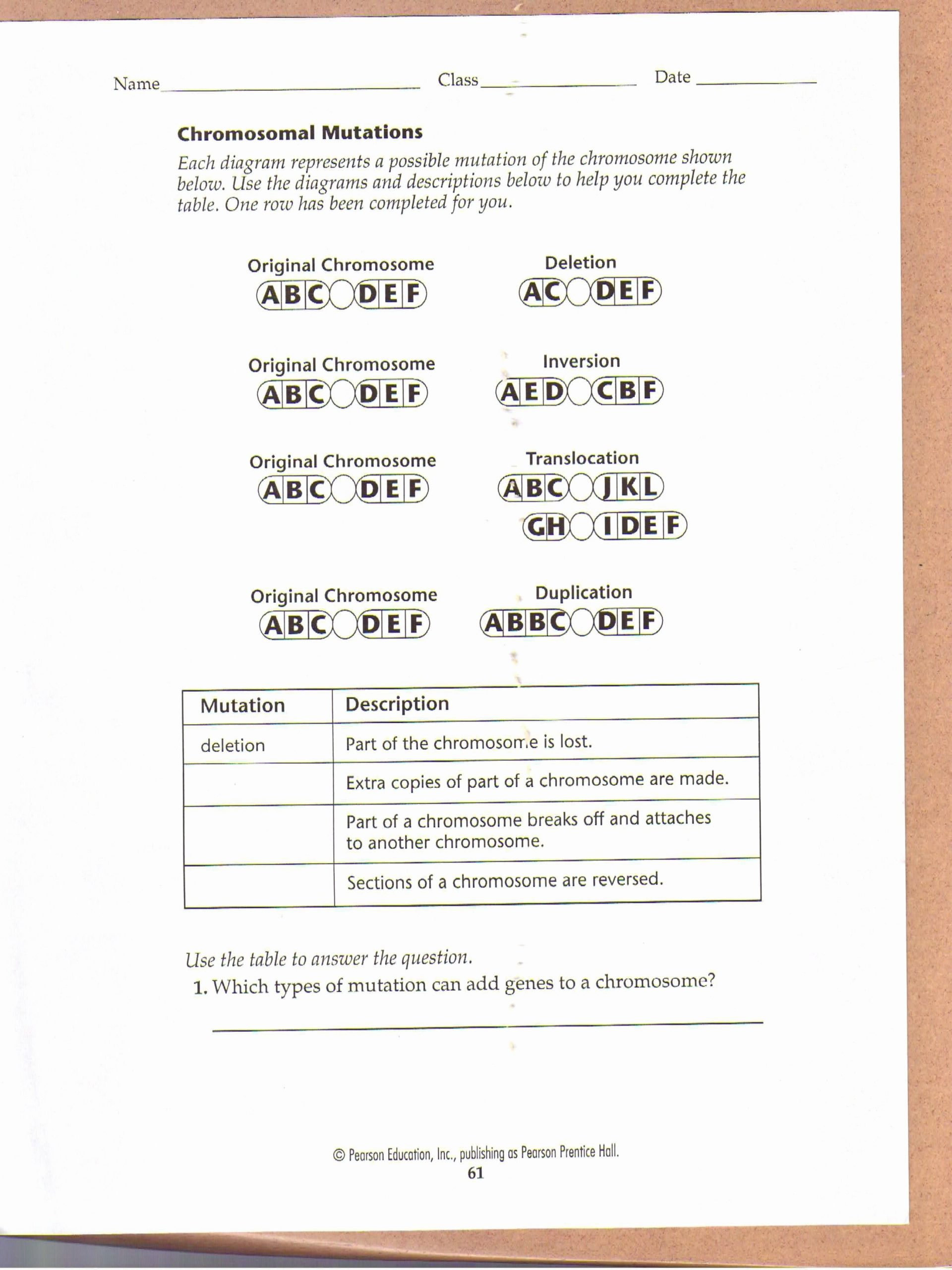 Genetic Mutation Worksheet Answer Key Inspirational