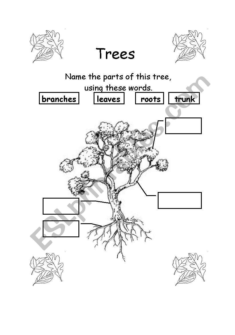 Parts Of A Tree Worksheet