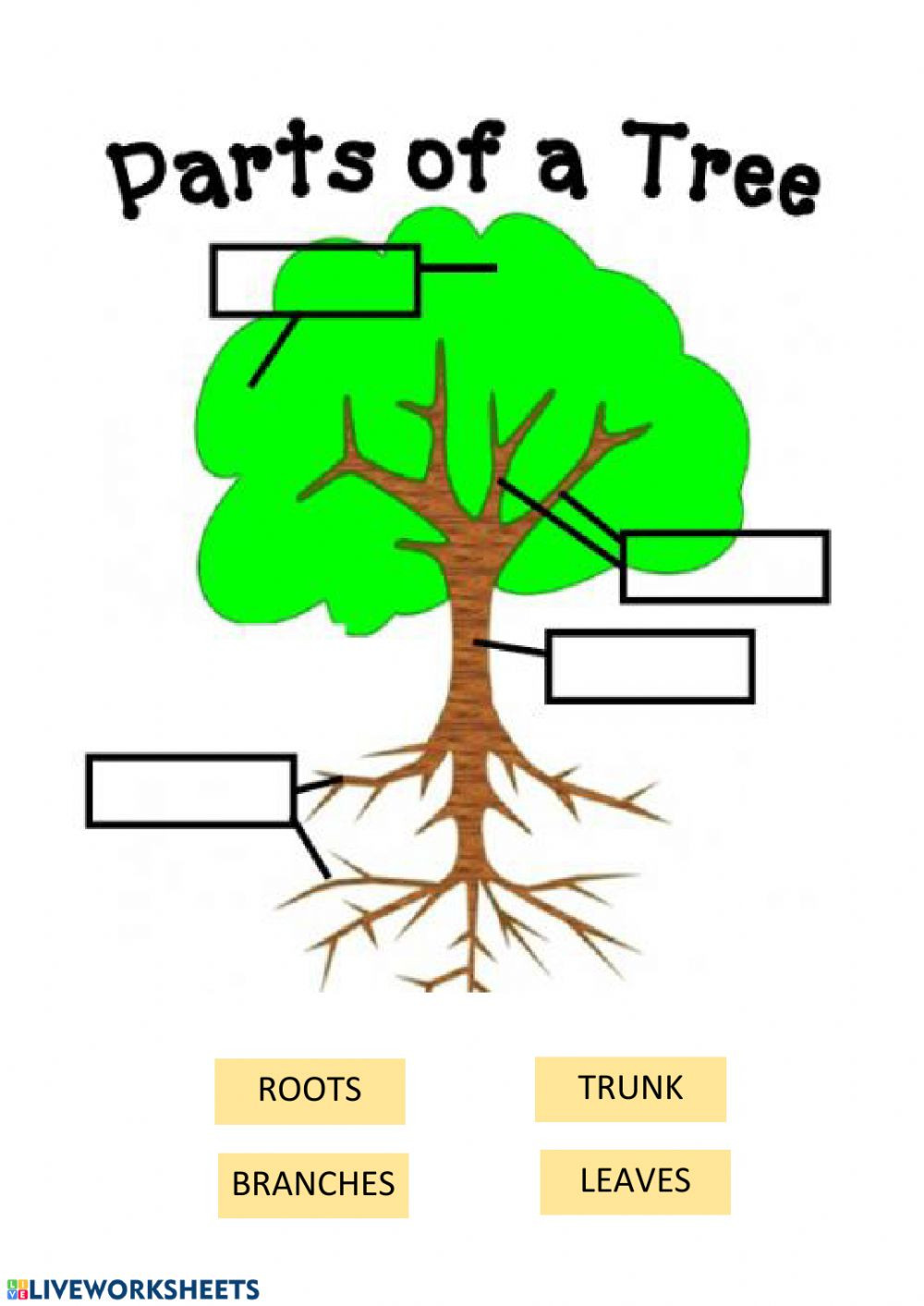 Parts of a tree Interactive worksheet