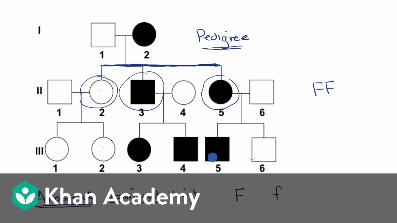 30 Pedigree Worksheet Answer Key   Education Template