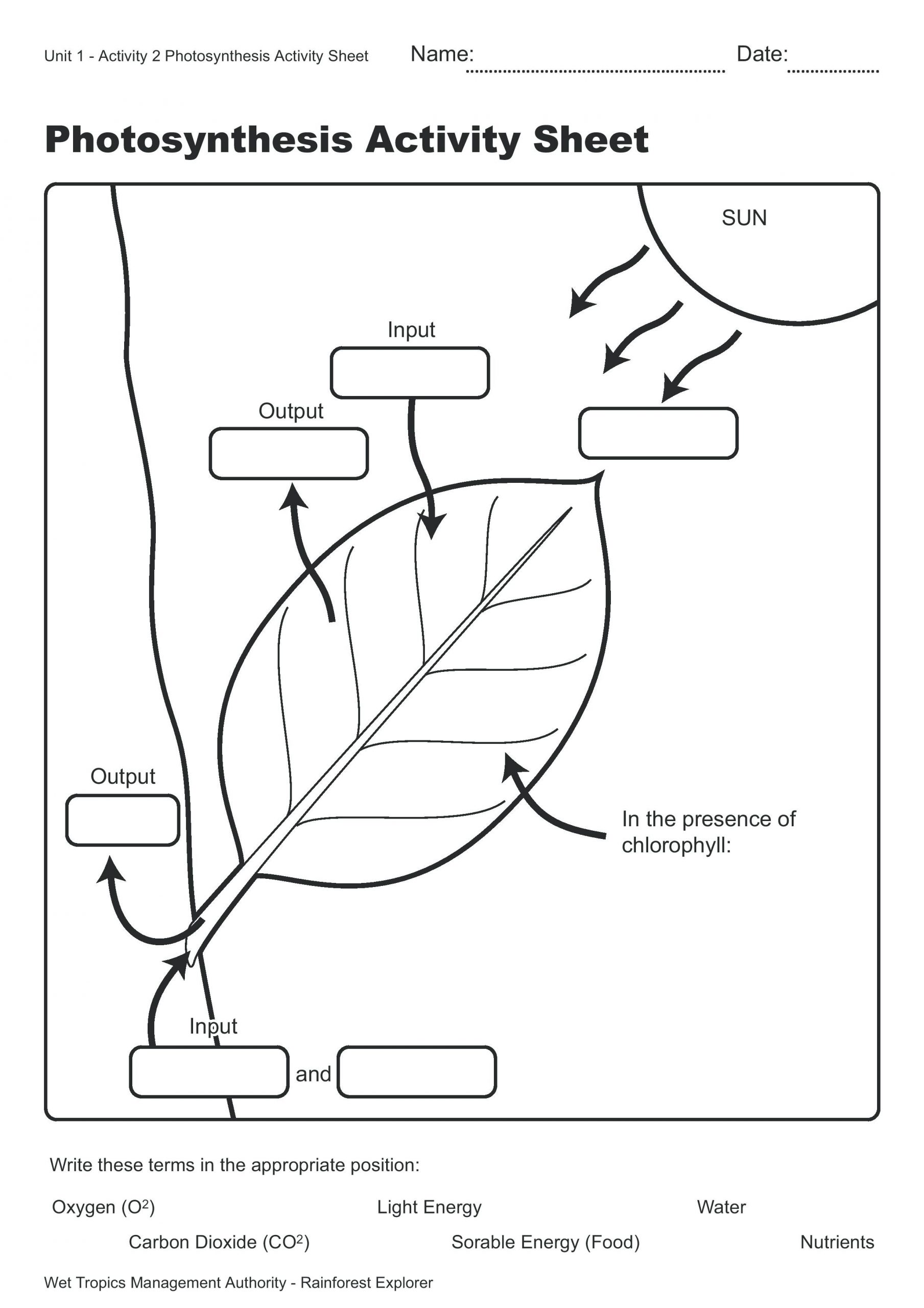 Biology Junction Photosynthesis Diagram Answers